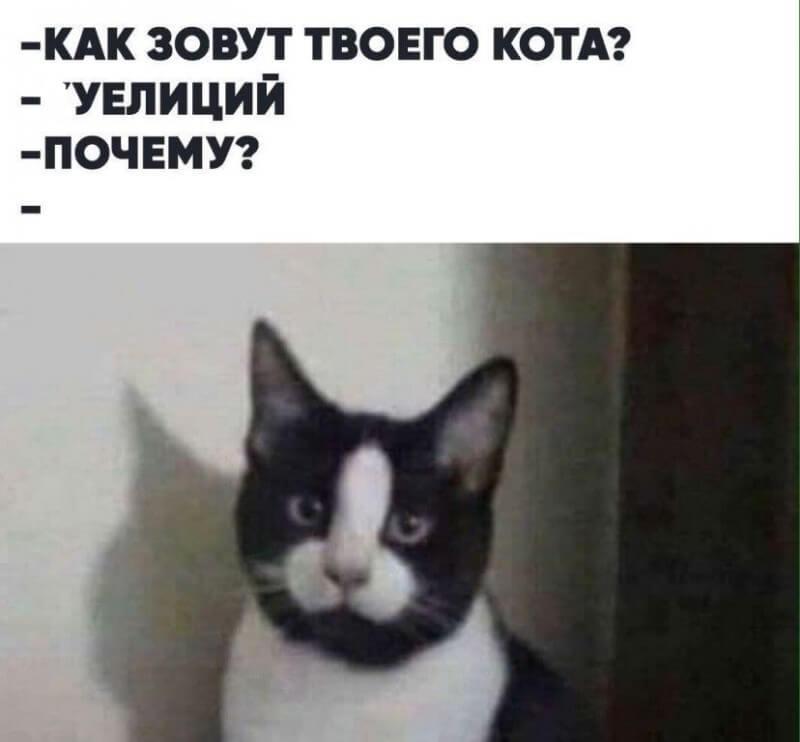 Прикольная картинка Как зовут твого кота