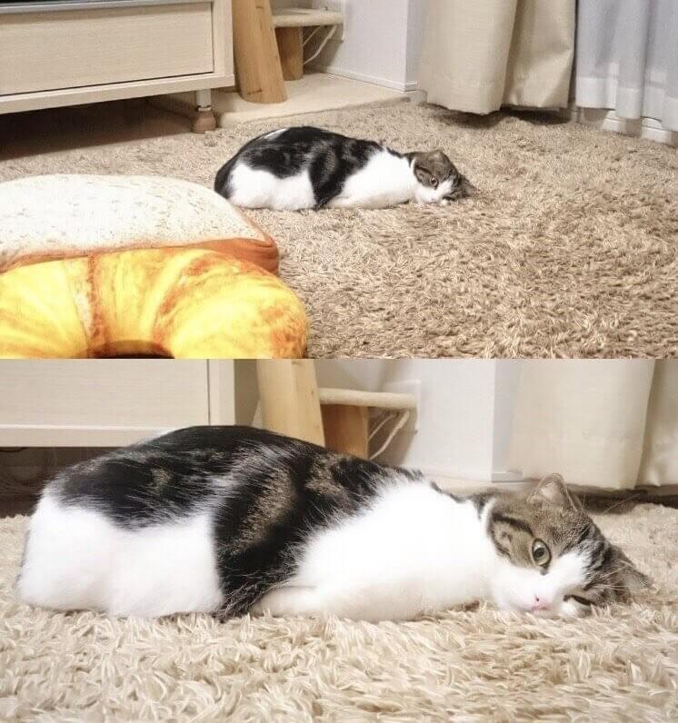Прикольная картинка Кот лежит на полу