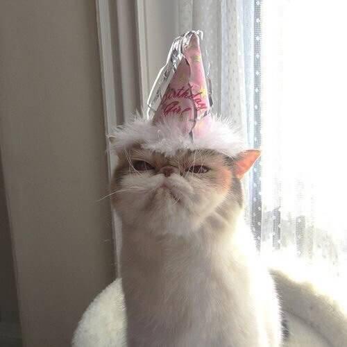Прикольная картинка Кот с колпаком