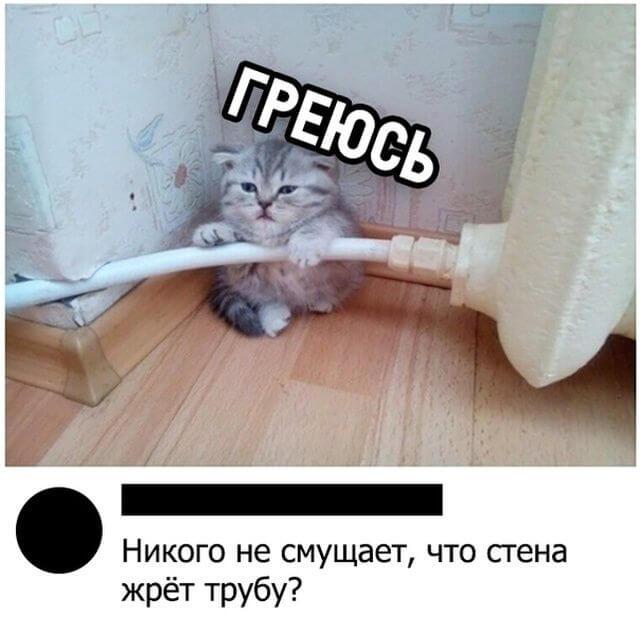 Прикольная картинка Котик греется