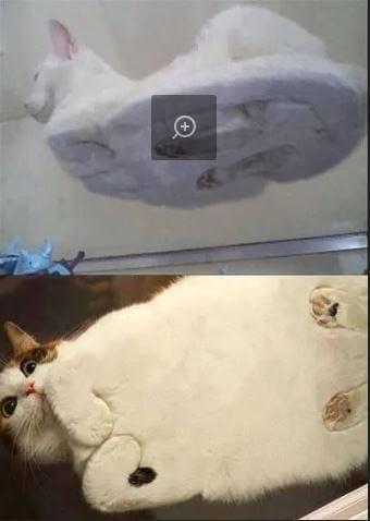 Прикольная картинка Коты на стеклянном столе