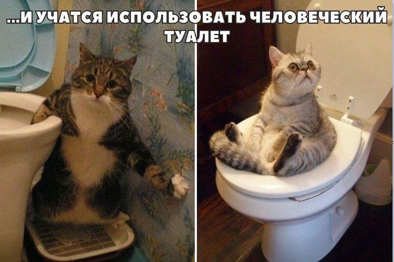 Прикольная картинка Коты учатся использовать унитаз