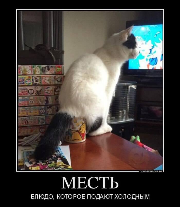 Прикольная картинка Месть кота