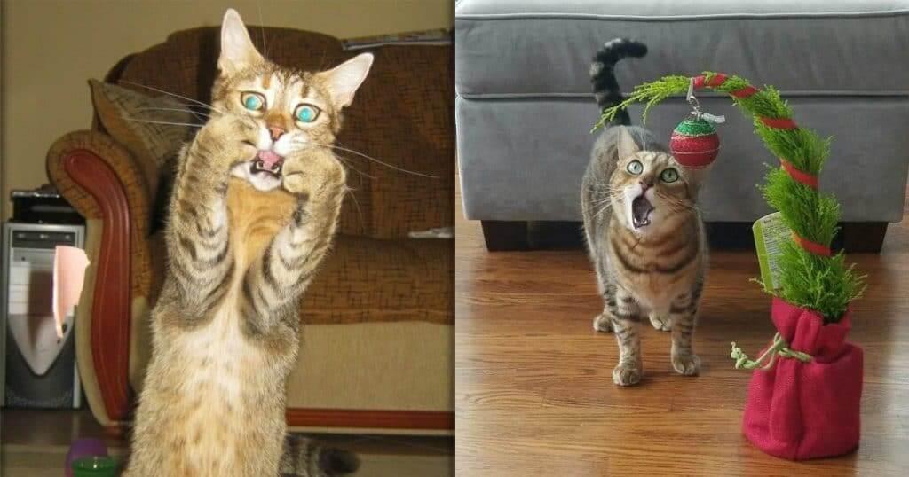 Прикольная картинка Удивления котов