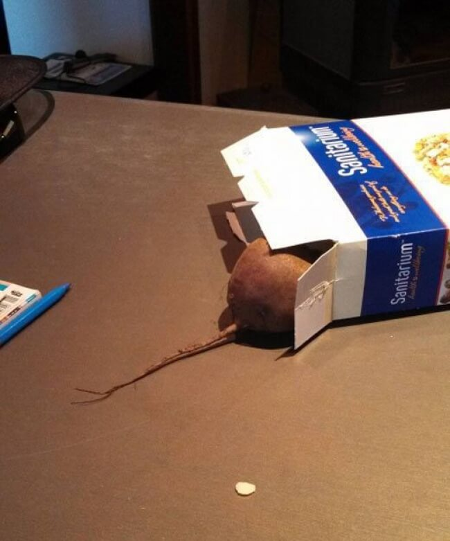 Прикольная картинка Свекла в виде мыши